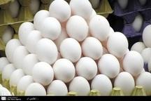 قیمت تخم مرغ در میادین پایتخت 17 درصد کاهش داشت
