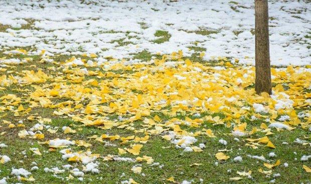 موج سرمای پاییزی به قزوین رسید