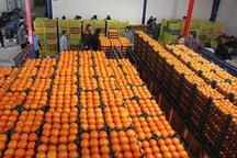 170 تن میوه شب عید در بروجرد ذخیره سازی شد