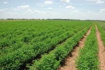 360 میلیارد تومان تسهیلات به کشاورزان خراسان جنوبی پرداخت شد