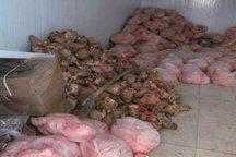 حدود سه هزار کیلوگرم گوشت فاسد در فردیس معدوم شد