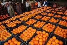 آغاز مرحله سوم توزیع میوه تنظیم بازار در 140 مرکز عرضه استان یزد