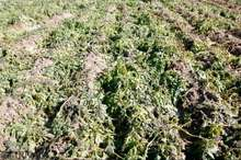 امسال 200 هزار میلیارد ریال خسارت به بخش کشاورزی وارد شد