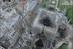 اولین تصاویر از داخل کلیسای نوتردام پس از آتشسوزی