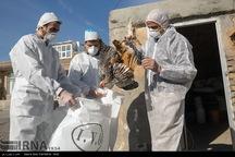 دامپزشکی مانورعملیاتی کنترل آنفلوانزای پرندگان برگزار کرد