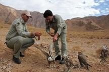 تغییر نگرش شکاربانی به محیط بانی در محیط زیست