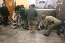 کشف بیش از 60 قطعه پرنده نادر تاکسیدرمی از شکارچی متخلف آملی
