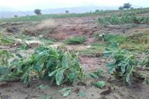 سیلاب 480 میلیارد ریال زیان به کشاورزی یزد وارد کرد
