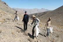 عملیات بذرپاشی آنغوزه شیرین در مراتع مهریز آغاز شد
