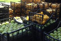 قاچاقچی میوه در مریوان بیش از چهار میلیارد ریال جریمه شد