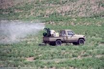 مبارزه با ملخ در 200 هکتار زمین کشاورزی خراسان رضوی انجام شد