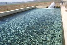710 تن ماهی در خراسان شمالی تولید شد