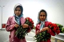 حدود 550 کودک کار در خوزستان شناسایی شده اند