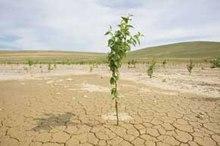 دشت تسوج بیشترین کاهش آب های زیرزمینی آذربایجان شرقی را دارد