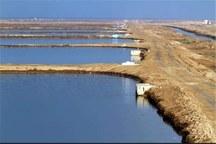 واگذاری زمین 600 هکتاری برای پرورش میگو قانونی است