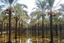 باران پاییزی نخلستان های تشنه آبادان و خرمشهر را سیراب کرد