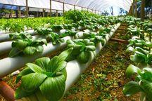 معرفی کشاورزان قزوینی برای دریافت ۱۲ میلیارد ریال تسهیلات فنی