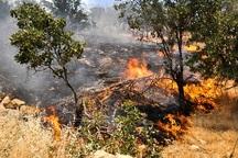 کاهش 72 درصدی آتش سوزی در جنگلها و مراتع لرستان