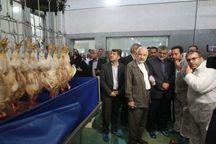 مجتمع زنجیره ای تولید گوشت مرغ در شرق اصفهان بهره برداری شد