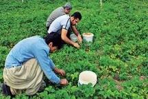 دامپروری و کشاورزی کردستان نقش تاثیرگذاری در رشد اقتصاد استان دارد