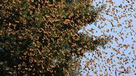 پروانه ها چه زمانی از تهران می روند؟
