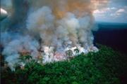 برزیل بالاخره با دریافت کمک برای خاموش کردن آتش سوزی آمازون موافقت کرد
