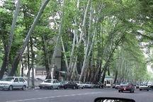 تمبری به نام تهران شهر درختان چنار باطل شد