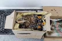 تغذیه پرندگان، حکم یک قاضی درگزی برای متخلفان محیط زیست