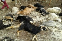 آتش، خانواده یتیم کهگیلویهای را به خاک سیاه نشاند+تصاویر