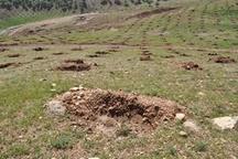 1500 هکتار جنگل کاری اقتصادی و مشارکتی در استان انجام می شود