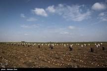 کشاورزان سیبزمینیکار استان اردبیل محصولات خود را بیمه کنند