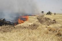 آتش زدن پس مانده محصولات در عرصه مزارع غیرقانونی است