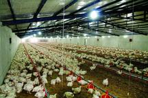 79 پروژه کشاورزی در یزد آماده بهره برداری است