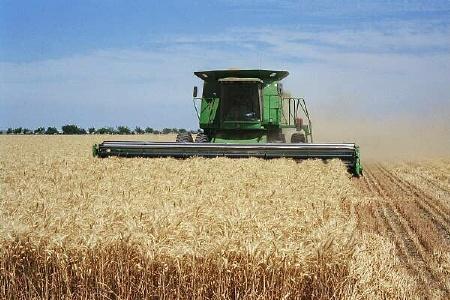 برداشت غلات از مزارع خراسان شمالی آغاز شد