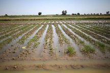 پژوهشگاه فضایی در تاخیر پرداخت تسهیلات به کشاورزان سیلزده لرستان نقش دارد