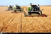 60 مرکز خرید گندم مازاد بر نیاز کشاورزان استان کرمانشاه را خریداری می کنند