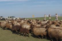 ممانعت مرزبانی درگز از خروج 500 راس گوسفند از کشور