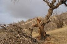 چالش های تهدیدکننده حیات جنگل ها و مراتع کهگیلویه و بویراحمد
