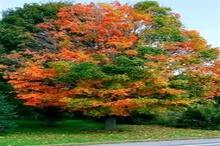 برگزاری متفاوت جشنواره پاییز هزار رنگ در گرگان