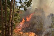 حریق دامن درختان کاهی را گرفت