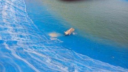 یک قلاده گرگ از استخر آب کشاورزی در شهرستان البرز نجات یافت