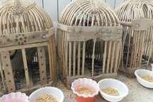 رهاسازی 16 قطعه پرنده در طبیعت بانه