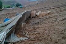 سیل به۱۵۰ واحد مسکونی و دامی عشایر خراسان شمالی خسارت زد