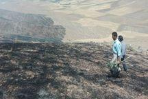 آتش سوزی در مراتع مسجدسلیمان مهار شد