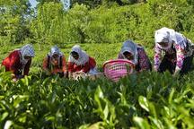 روستاها در توسعه زنجان نقش محوری دارند