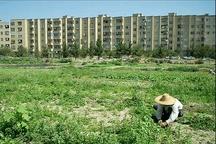 تغییر کاربری اراضی کشاورزی، چرخه تولید را کند میکند