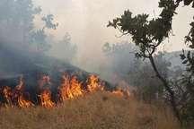 هشت هزار متر مربع جنگل سوزنی برگ تالاب لپو بهشهر در آتش سوخت