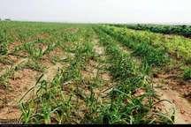 سیل 600 میلیارد تومان به بخش کشاورزی مازندران خسارت زد