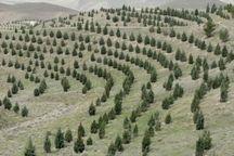 افزون بر ۹۰۰ هکتار از اراضی جنگلی کرمان نهالکاری میشود