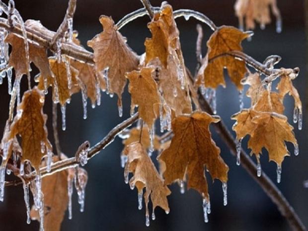 سرما در خراسان جنوبی باعث یخبندان می شود